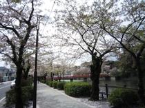 城址公園桜並木3