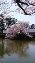 桜2018-1