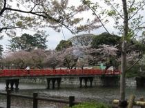 城址公園桜並木4