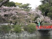 城址公園桜並木8