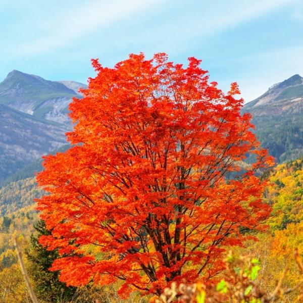 志賀高原の美しい紅葉