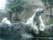 話題の旭山動物園