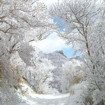 【冬の雲仙】幻想的な光を放つ仁田峠の霧氷。