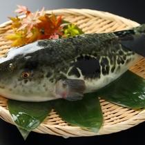 長崎橘湾産「戸石産のとらふぐ」は身が締まって味が良い!と関東の料亭で人気です。