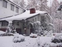 初雪の降った日のコットンスノー
