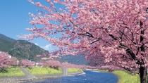 *当館から河津町までお車で約50分 毎年、河津桜祭が開催されます。