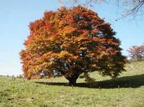 七色の紅葉に輝く大かえで