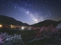 花桃と天の川