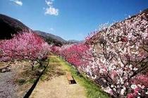 恵那山方面と花桃