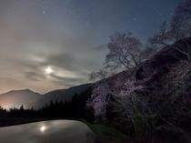 駒つなぎの桜と星空