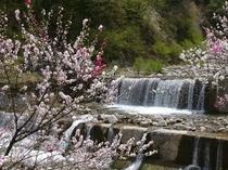 花桃と渓流