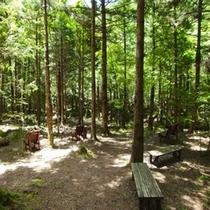 森林セラピー