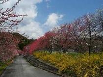 花桃とレンギョウ