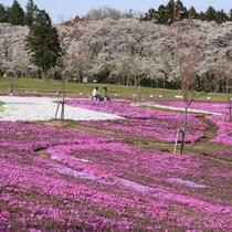 【千本桜】例年見ごろは4月10日前後です!(見頃は天候などで前後します)