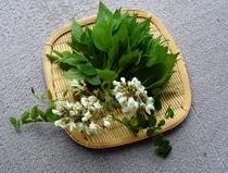 天ぷら食材・春