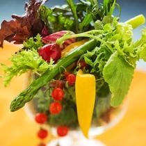 【地産の健康野菜サラダ】