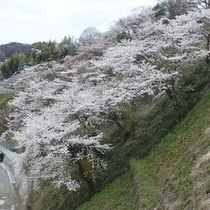 御幸山公園のソメイヨシノ