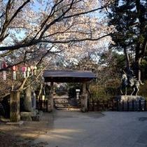 勿来の関公園のソメイヨシノ