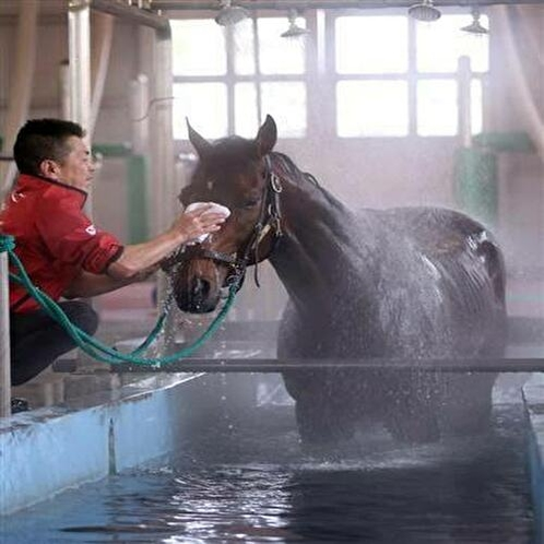 JRA 馬の温泉
