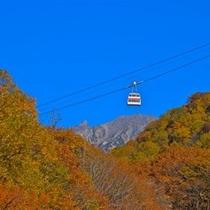 ≪新穂高ロープウェイの紅葉≫ 見ごろは10月上旬から10月下旬