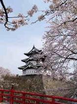 弘前城のさくら