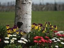 英国貴族の館 お庭のお花