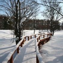 【冬〜白銀の世界をお散歩】