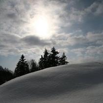 【冬〜輝きの森】
