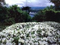 浄土ヶ浜の背後に位置する小高い丘の公園「臼木山」(宮古)
