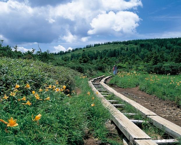 花の楽園を散歩「黒谷地湿原」(八幡平)