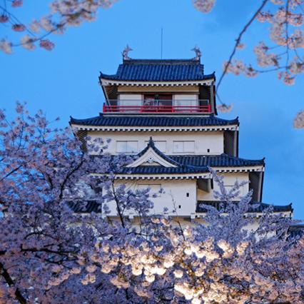 桜とライトアップされた会津若松城(車で120分程)
