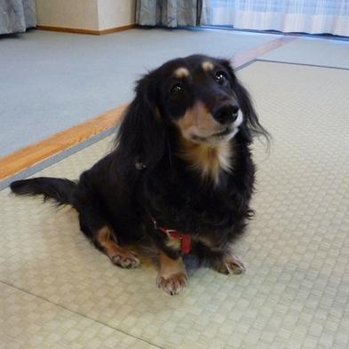●【小型犬同伴OK】ワンちゃんの似顔絵入り色紙プレゼント♪ワンコ1匹まで同伴無料♪ペットと一緒プラン