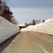 春に出現するスカイライン雪の回廊(冬季閉鎖)