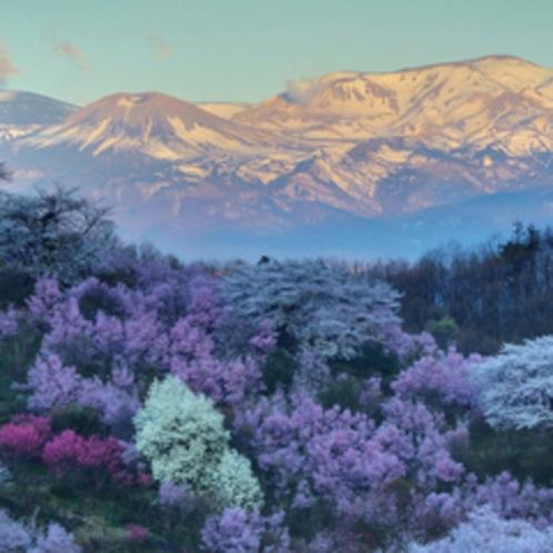 春の花見山と吾妻連峰(車で30分程)