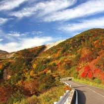 磐梯吾妻スカイラインの紅葉。例年では10月中旬〜11月下旬が見ごろです。(冬季閉鎖)