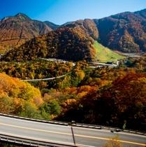 【観光】秋の平湯峠