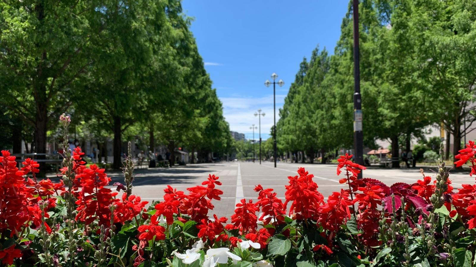 大通り公園沿いにホテルはございます。