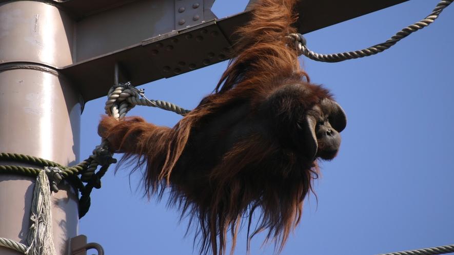 旭山動物園◆