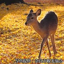 奈良の四季【秋】           奈良公園