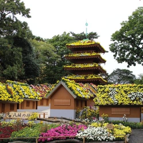 三島楽寿園「菊まつり」
