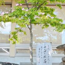 *【やまぼうしの木】