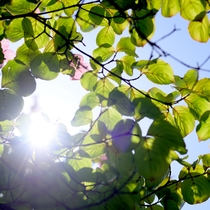 *庭園/天気のいい日には、庭園の散歩もお勧めです。
