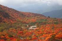 茶臼岳の紅葉1