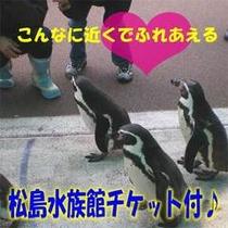 松島水族館チケット付♪
