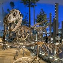 恐竜博物館(館内)