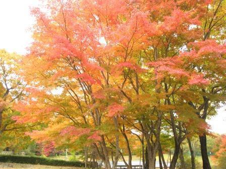 駐車場付近紅葉