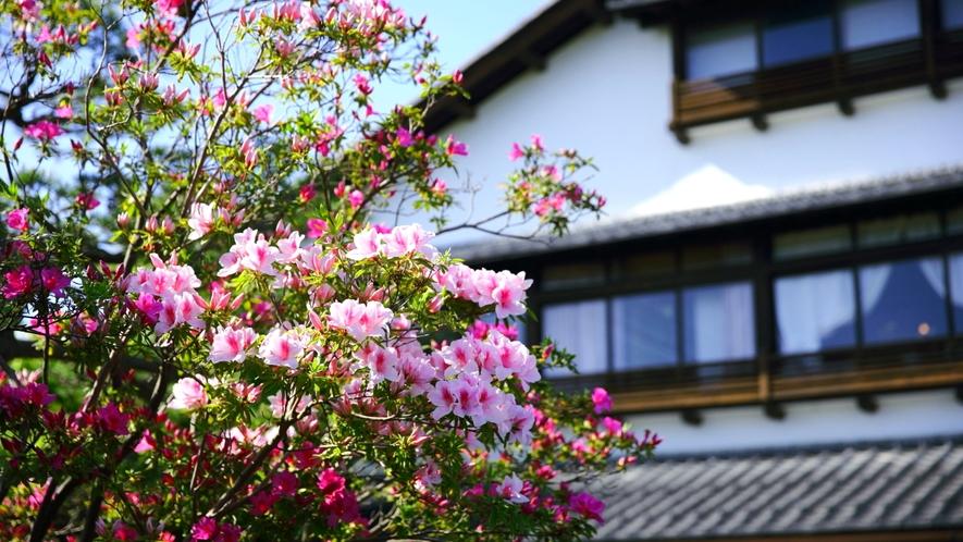 春はつつじやハナミズキが咲き誇ります(開花は天候に左右されます)。