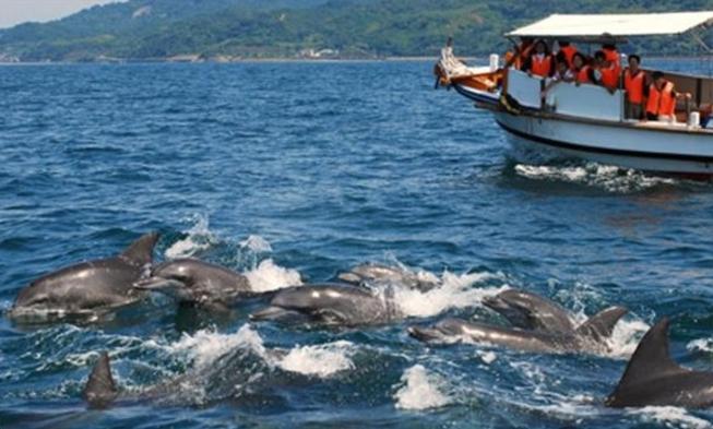 イルカに会える!こころ踊る感動のウォッチング付宿泊プラン
