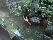 大浴場、マッサージ室からは鯉もご覧頂けます。