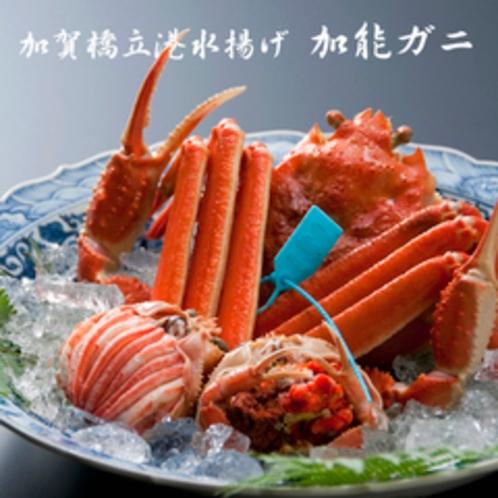 地元橋立港水揚げタグ付きずわい蟹(一例)